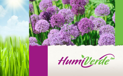 Organic Logo Design for HumiVerde