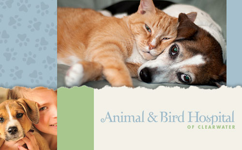 Website Design for Animal & Bird Hospital of Clearwater